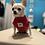 Thumbnail: Maglioncino Chihuahua Micropile - Ciliegia