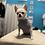 Thumbnail: Maglioncino Chihuahua - Micropile Grey