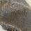 Thumbnail: t-shirt BULLDOG FRANCESE - DIAMOND