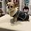 Thumbnail: Shearling Vintage Chihuahua