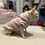 Thumbnail: Felpa Chihuahua - Sweetsheep Pink