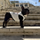 Thumbnail: Felpa Bulldog - TOP DOG