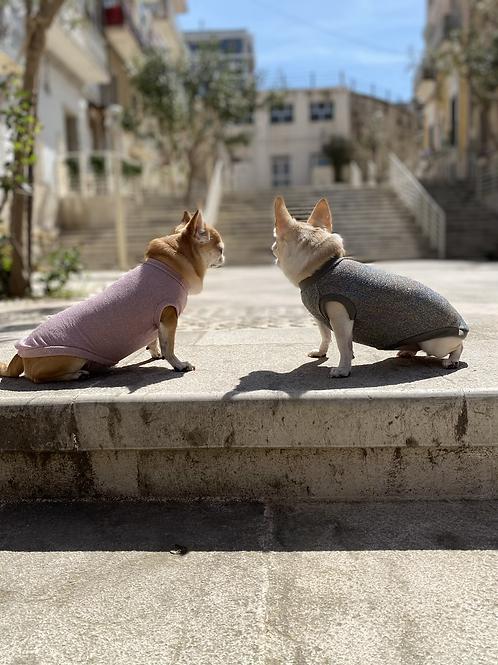 T-shirt Chihuahua - DIAMOND