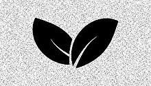 leaf%202_edited.jpg