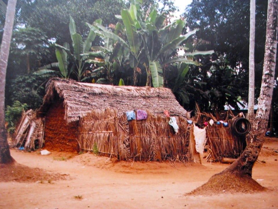 spice plantation in Zanzibar