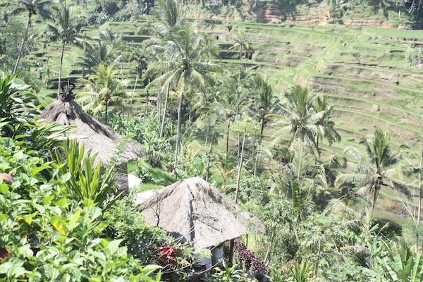 Balinese spice plantation