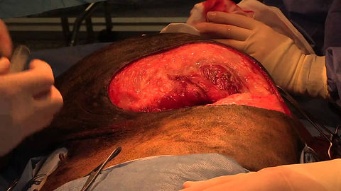 Soft Tissue Surgery.jpg