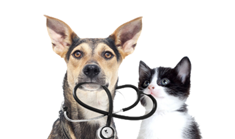 vaccine-dog-cat.png