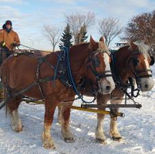 Horsedrawn Sleigh