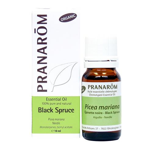 Black Spruce, Organic
