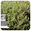 Thumbnail: Thyme CT Thymol, Organic