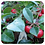 Thumbnail: Wintergreen