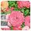 Thumbnail: Rose, Organic