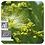 Thumbnail: Clove, Organic