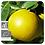 Thumbnail: Grapefruit, Organic 10ml