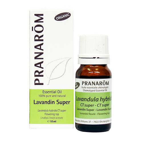 Lavandin Super, Organic