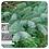 Thumbnail: Black Spruce, Organic