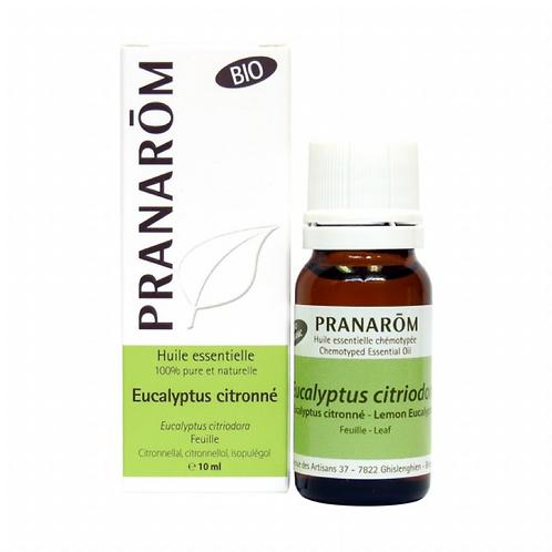 Eucalyptus Lemon-Scent, Organic
