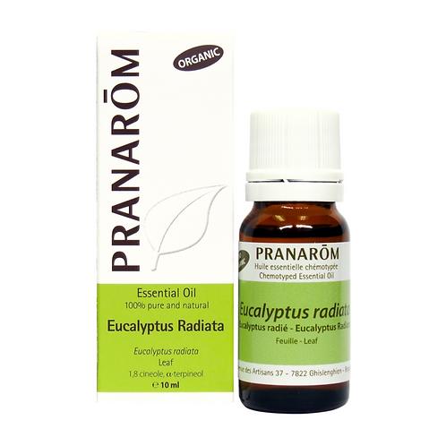 Eucalyptus Radiata, Organic