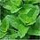 Thumbnail: Spearmint, Organic