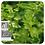 Thumbnail: Basil, Organic