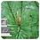 Thumbnail: Scots Pine, Organic