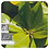 Thumbnail: Petitgrain, Organic