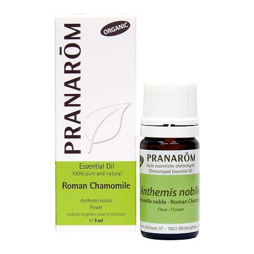 Roman Chamomile, Organic
