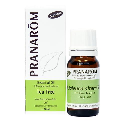 Tea Tree, Organic