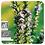 Thumbnail: Rosemary Verbenone CT3, Organic