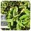 Thumbnail: Ledum, Organic