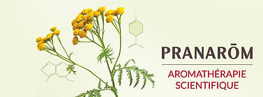 Pranarom Scientific Aromathrapy Banner with Helichrysum (Everlasting) Flower and Aromatic Molecules