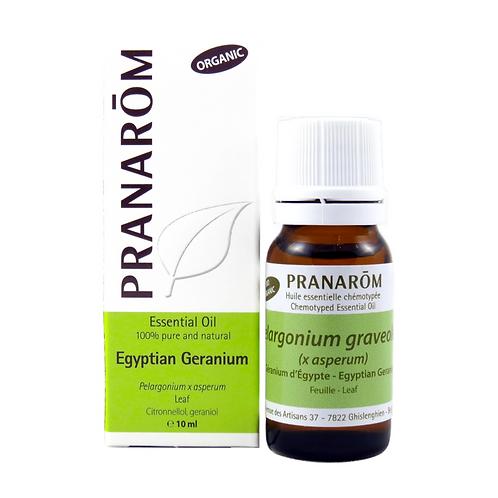 Egyptian Geranium, Organic