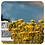 Thumbnail: Everlasting / Helichrysum, Organic