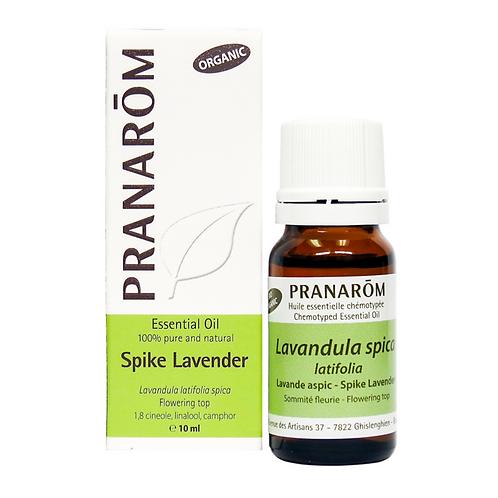 Lavender Spike, Organic