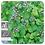 Thumbnail: Patchouli, Organic