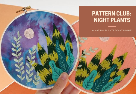 What Do Plants Do At Night?