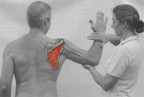 Applied Kinesiology: What is it and how can it help me?
