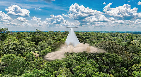 rainforest44.jpg