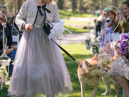 Advice for Incorporating Pets into Your Wedding Photos