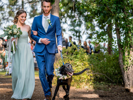 Ways to Incorporate Your Dog into Your Wedding for Adorable Photos