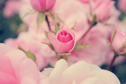 一言贈る♪ホルモンバランスが整う♪薔薇入りの紅茶(華道家監修の特級品質)