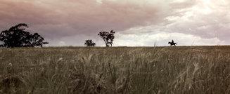 Aisling - horse landscape