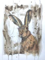 Yarkand Hare