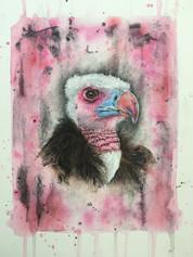 White Headed Vulture