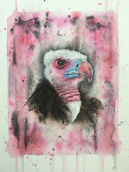 V is for White Headed Vulture