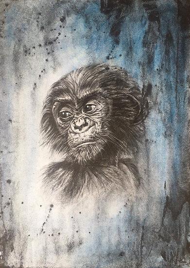 B is for Bonobo