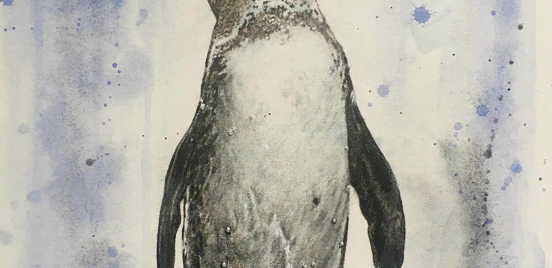 Galapago Penguin
