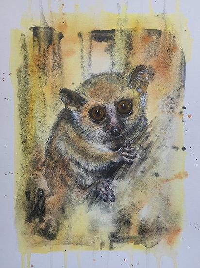 L is for Madame Berthe's Lemur
