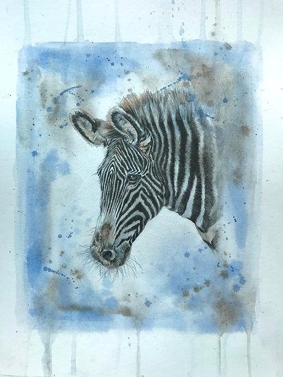 Z is for Grevy's Zebra